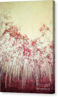 Shades Of Red Canvas Print - The Red Forest by Priska Wettstein