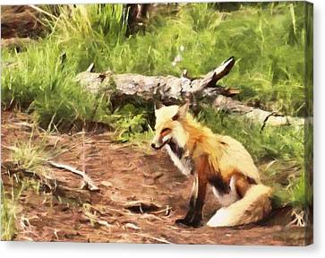 The Red Fox Canvas Print by Dan Sproul