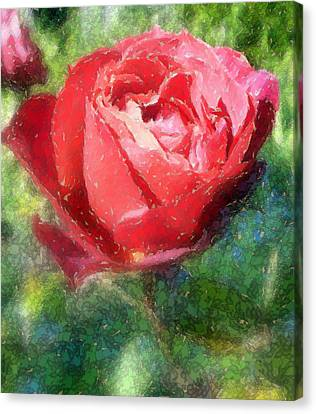 The Red Rose Canvas Print by Carol Grimes