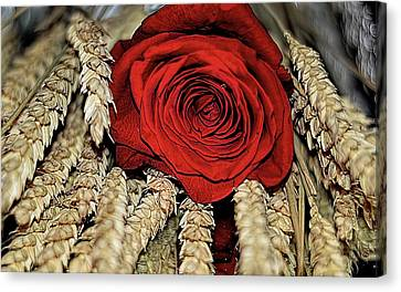 Canvas Print featuring the photograph The Red Rose On A Bed Of Wheat by Diana Mary Sharpton