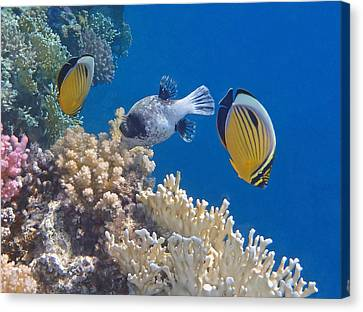 The Red Sea Underwater World Canvas Print
