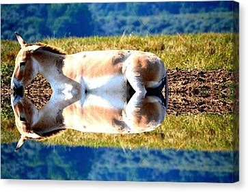 The Reflection Canvas Print by Anand Swaroop Manchiraju