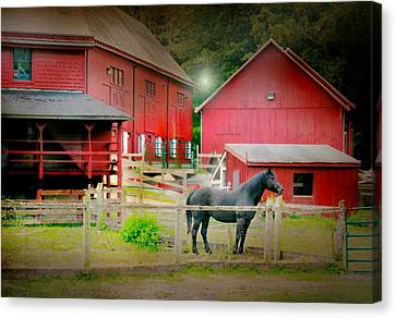Horse Stable Canvas Print - The Resident by Diana Angstadt