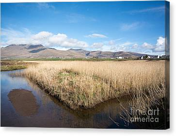 The River Feoghanagh Canvas Print by Nichola Denny