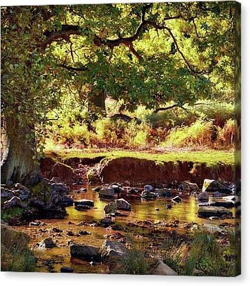 The River Lin , Bradgate Park Canvas Print by John Edwards