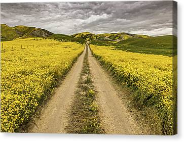 Canvas Print featuring the photograph The Road Less Pollenated by Peter Tellone
