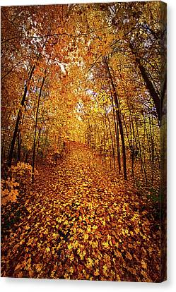 The Road Never Traveled Canvas Print by Phil Koch