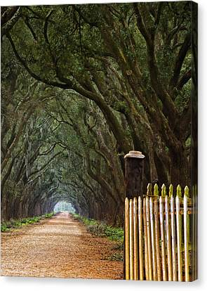 Gatepost Canvas Print - The Road To Evergreen Plantation by Mitch Spence
