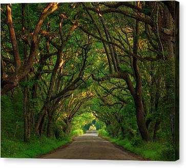 The Road To Heven  Canvas Print