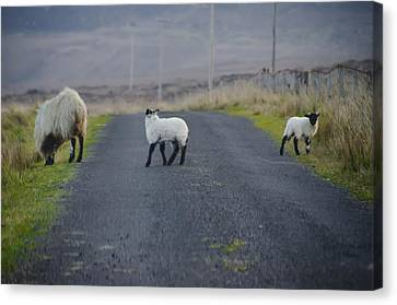 The Roads In Ireland Canvas Print by Bill Cannon