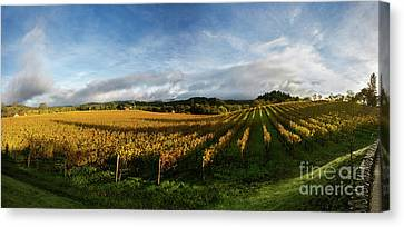 The Rolling Vineyards Of Napa  Canvas Print by Jon Neidert