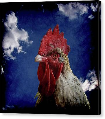 The Rooster Canvas Print by Ernie Echols