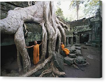 The Roots Of A Strangler Fig Creep Canvas Print