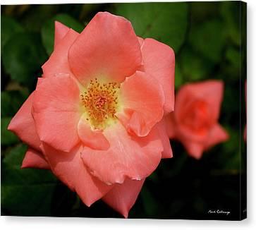 Flowerrs Canvas Print - The Rose 10 Flower Garden Art by Reid Callaway