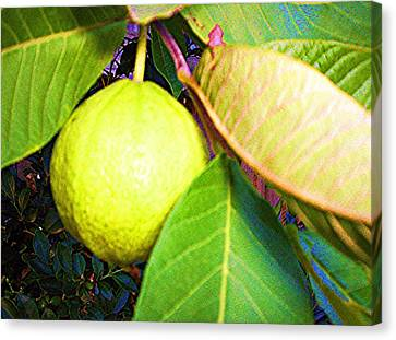 Canvas Print featuring the digital art The Rose Apple by Winsome Gunning