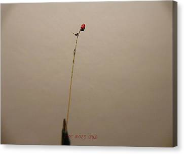 Canvas Print featuring the sculpture The Rose Bud by Phillip H George