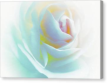 The Rose By Scott Cameron Canvas Print