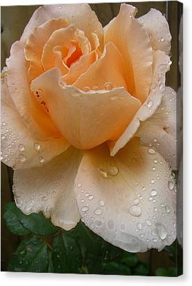 The Rose Canvas Print by Kimberly Morin