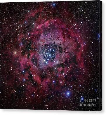 Monoceros Canvas Print - The Rosette Nebula by Robert Gendler