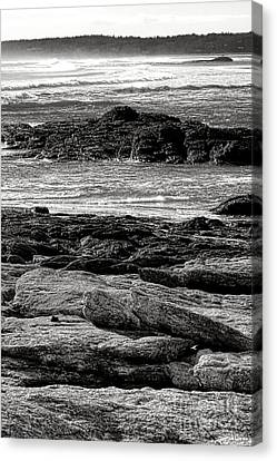 The Rugged Coast Of Maine Canvas Print by Olivier Le Queinec