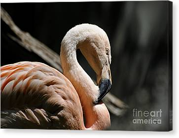 The Sacred Old Flamingoes Canvas Print by Lois Bryan