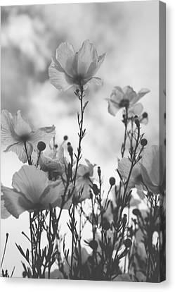 Black And White Florals Canvas Print - The Same Air You Breathe by Laurie Search
