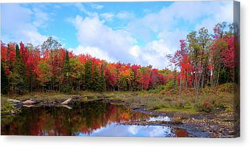 The Scarlet Reds Of Autumn Canvas Print by David Patterson