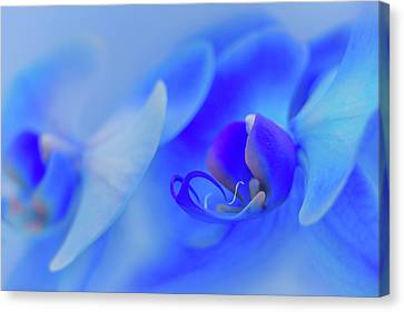 The Scent Of Blue Mystique Canvas Print