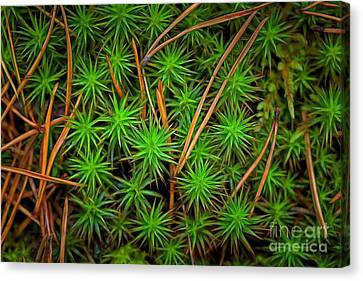 Pine Needles Canvas Print - The Scent Of Pine Forest IIi by Veikko Suikkanen