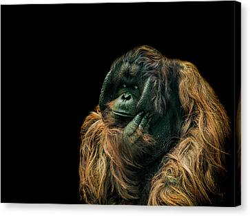 The Sceptic Canvas Print