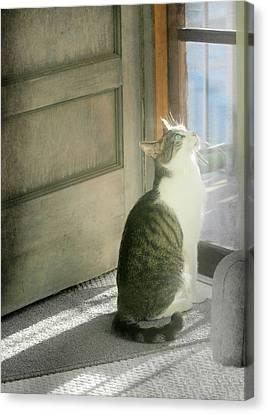 The Screen Door Cat Canvas Print by Diana Angstadt
