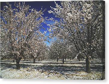 Canvas Print featuring the photograph The Season Of Us by Laurie Search