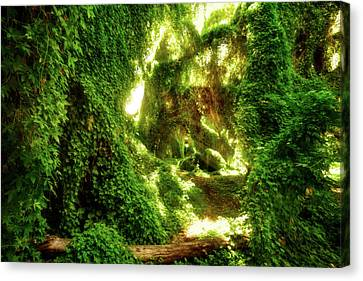 Canvas Print featuring the photograph The Secret Garden, Perth by Dave Catley