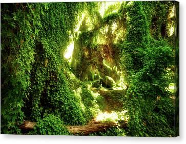 The Secret Garden, Perth Canvas Print