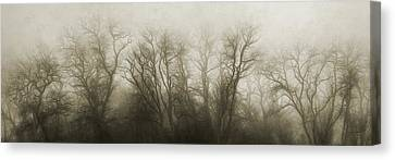 Sepia Tone Canvas Print - The Secrets Of The Trees by Scott Norris