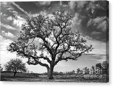 Canvas Print featuring the photograph The Sentinel Bw by Jemmy Archer