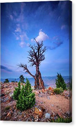 The Sentinel Still Stands Canvas Print by Dan Holmes