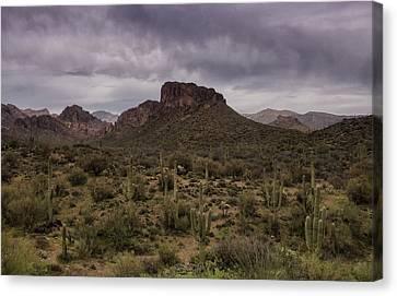 The Sentinels Of The Sonoran Desert  Canvas Print by Saija Lehtonen