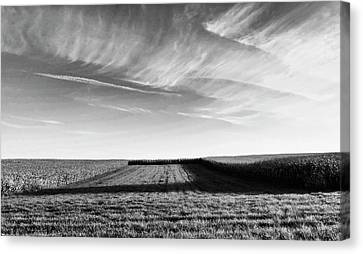 Cornfield Canvas Print - The Shadow by Wim Lanclus