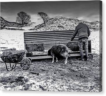 The Shepherd Canvas Print by Keith Elliott