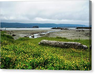 Canvas Print - The Shoreline by Ric Schafer