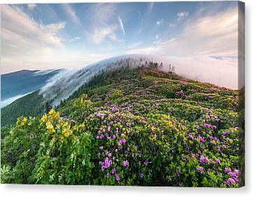 The Silky Embrace Of The Roan Highlands Canvas Print by Mark VanDyke