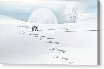 The Silver Fox Canvas Print