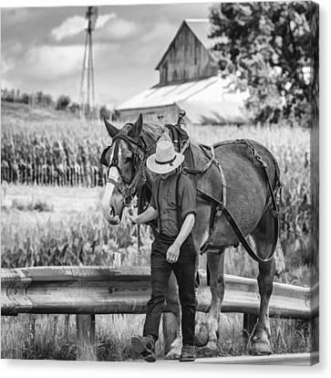 Plow Horse Canvas Print - The Simple Life Bw by Steve Harrington