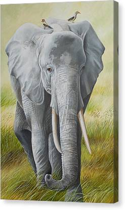 Arcylic Canvas Print - The Singing Oxpecker Hitchhikers Catch A Ride by Golanv  Waya