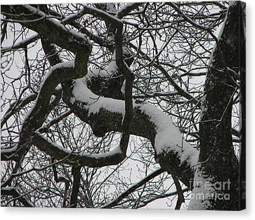 The Skyward Pathway In Snow Canvas Print by Roxy Riou