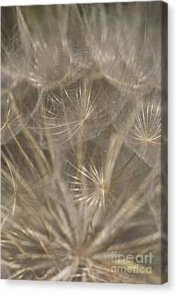 Close Focus Floral Canvas Print - The Slightest Breeze... by Anne Gilbert