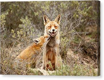 The Smiling Vixen And The Happy Kit Canvas Print