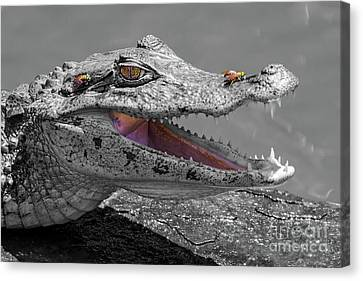 The Smiling Crocodile And The Flies Canvas Print
