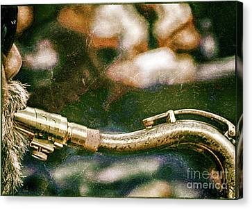 The Snake  Canvas Print by Steven Digman